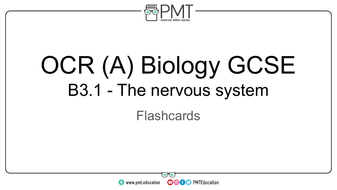 Flashcards---Topic-3.1-The-nervous-system---OCR-(A)-Biology-GCSE.pdf