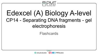 Flashcards---CP-14-Separating-DNA-fragments---gel-electrophoresis---Edexcel-(A)-Biology-A-level.pdf