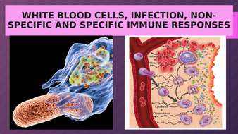 INFECTION--INFLAMMATION-AND-IMMUNE-RESPONSES.pptx