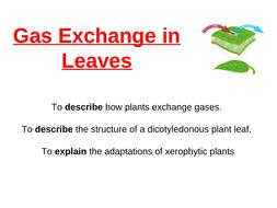 Leaves-2020---Copy.ppt