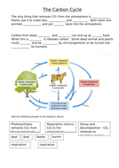 Carbon-cycle-worksheet.doc