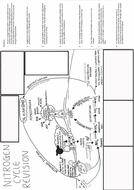 a3-nitrogen-cycle-blankfinal.pdf