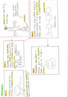3.10-Protein-synthesis-side-2.pdf