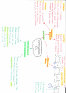 3.3-Carbohydrates-side-2.pdf