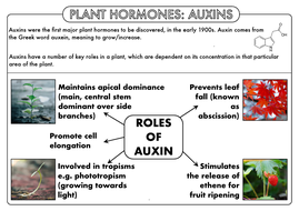 A-Level-PH-Auxins-Summary-Sheet.pdf