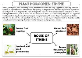A-Level-PH-Ethene-Summary-Sheet.pdf