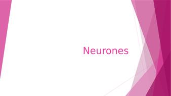 0128-Nerves.pptx