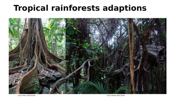 Adaptations in a tropical rainforests