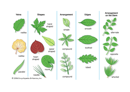 leaf-classification-2.docx