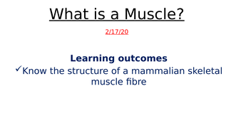 What-is-a-Muscle.pptx