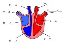 The Heart - AQA (9-1)   Teaching Resources