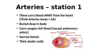 The Heart & Blood vessels (AQA - Organisation topic ...