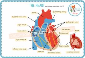 The Heart - Digital Label Activity (KS3/4) | Teaching ...
