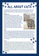 All-About-Cats-Y2.pdf