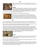 wild_cats-lesson-1-text-c.docx