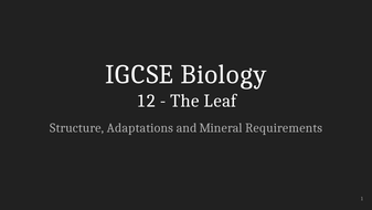 IGCSE-Biology-Lecture-12_-The-Leaf.pptx