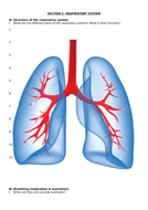 Section-C---Respiratory-System-Revision-Worksheet.docx