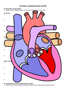 Section-D---Cardiovascular-System-Revision-Worksheet.docx