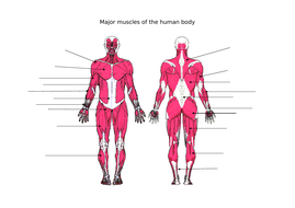 Muscles-worksheet.docx