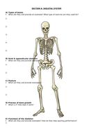 Section-A---Skeletal-System-Revision-Worksheet.docx