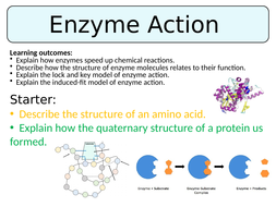 Enzyme-Action.pptx