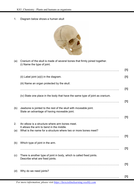 Exercise-4-Joints.pdf