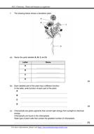Exercise-1-Plant-organs.pdf