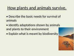How-plants-and-animals-survive.pptx