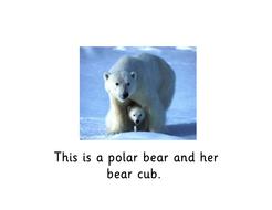 bears.pdf