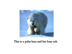 Bear powerpoint