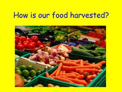 Harvest food presentation