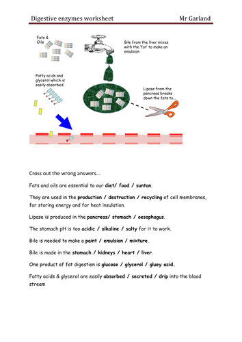 Worksheets Enzyme Worksheet enzymes digestion by dave gar teaching resources tes