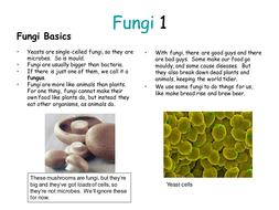 Fungi Summary.ppt