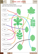 trees_and_leaves_ answers.pdf