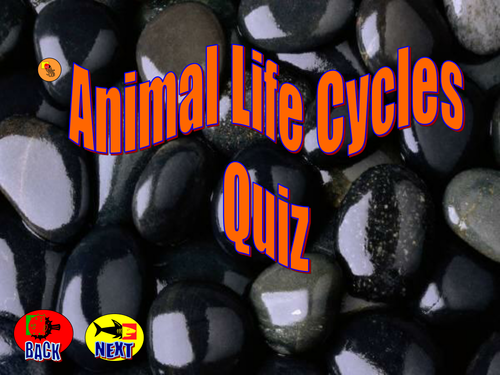 animal life cycles quiz pdf