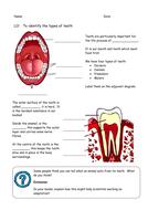 Teeth worksheet