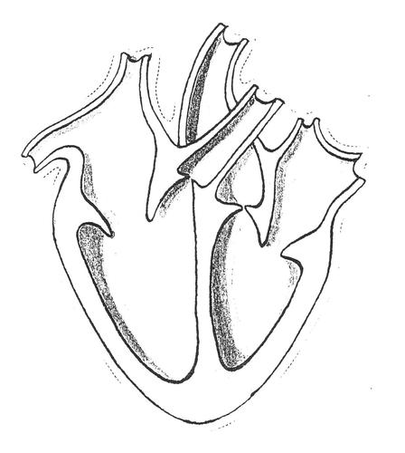 Blood Circulatory System by robbojamie - Teaching ...