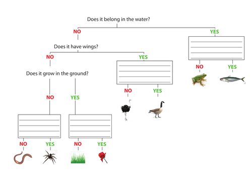 Classification Keys by kirstyebowden Teaching Resources TES – Classifying Organisms Worksheet
