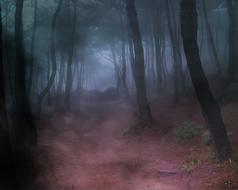 Forest_fog.jpg