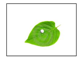 caterpillar posters holes.pdf