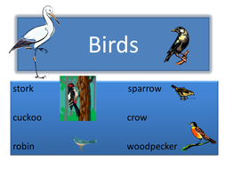 Birds_power_point.ppt