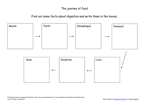 Digestion by HamiltonTrust Teaching Resources Tes – Digestive System Diagram Worksheet