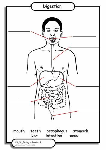 digestion by hamiltontrust teaching resources tes : digestion diagram ks2 - findchart.co