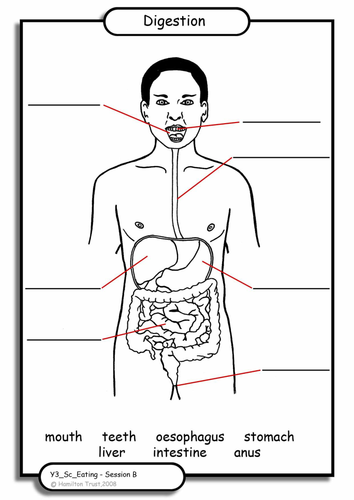 Diagram of digestive system ks2 diagram digestion by hamiltontrust teaching resources tes ccuart Choice Image