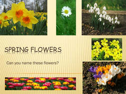 Spring Flowers By Ronanbreathnach Teaching Resources Tes