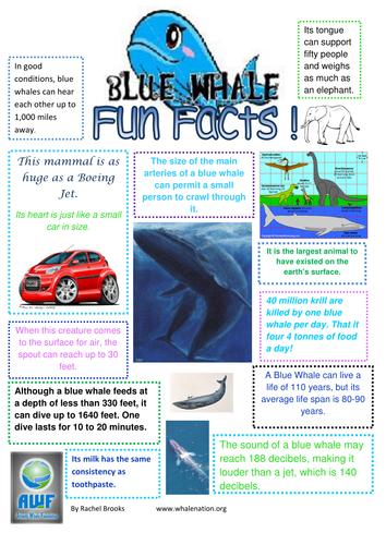 Shark Fact Sheet For Kids