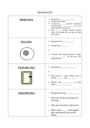 specialised cells worksheet by lundi teaching resources tes. Black Bedroom Furniture Sets. Home Design Ideas