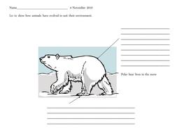 lesson evolution worksheets.ppt