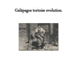 The Evolution of the Galapagos Turtles.ppt
