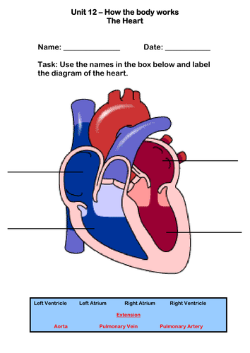 the human heart worksheet by robbirdy84 teaching resources tes. Black Bedroom Furniture Sets. Home Design Ideas